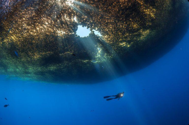 5,500 miles Of Seaweed - Haeckels